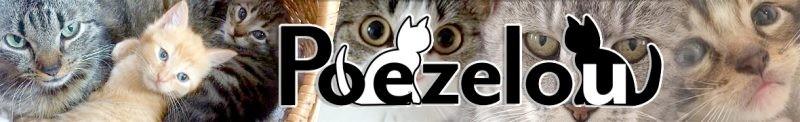 Poezelou - Zwerfkatjes Koekelare